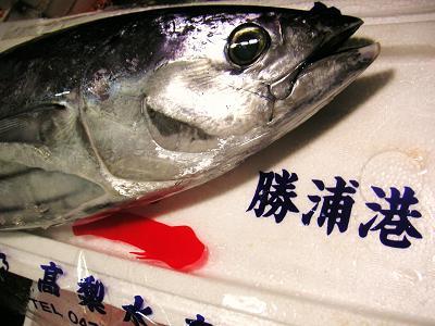 カツオ(勝浦)1 (2)