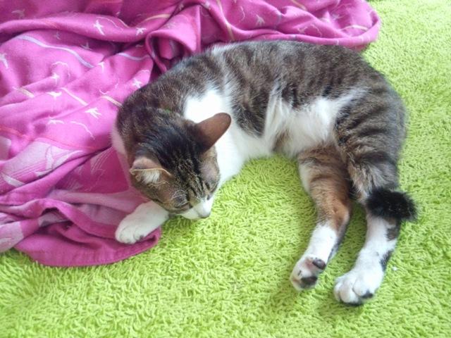 寝てしまいました ・・・トトラ
