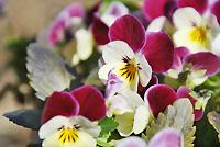 チビとこお庭のお花たち。。