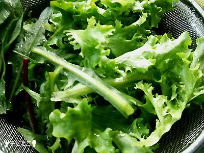 お庭で採れた野菜たち。。