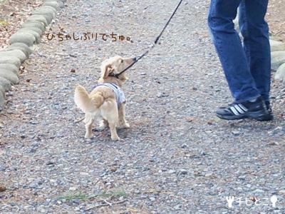 公園お散歩♪