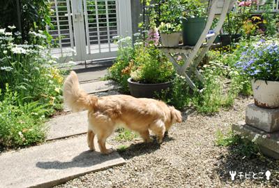 りっくんお庭をお散歩。。