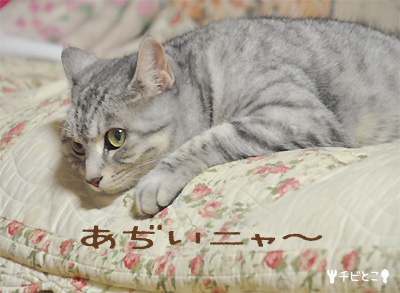 バテたアホもこさん(=^・^=)