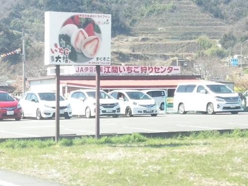 2014.3.22伊豆長岡の江間いちご狩りセンターは混んでいた写真画像