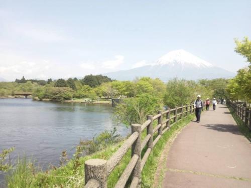 富士山が見える田貫湖ほとりの散歩道を散歩やサイクリングする方々が多かった光景