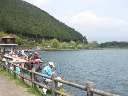 田貫湖で富士山に包まれ釣りをする多くの方を見かけた光景であるがへらぶなやブラックバスが釣れるそうだ