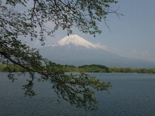 美的アートの富士山撮影作品で葉桜と共に富士山が田貫湖を包む瞬間を撮影した