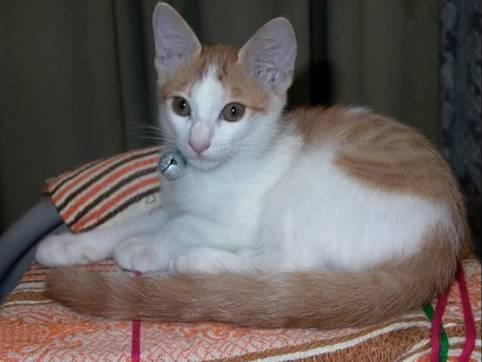 猫写真のクリちゃん10