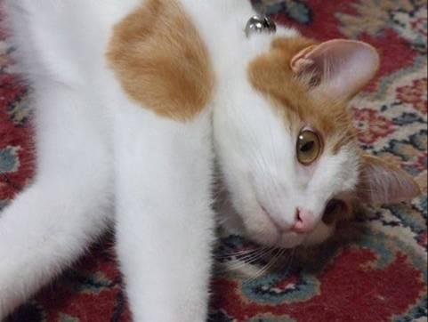 猫のクリちゃんが時計屋さんで修理した時計を眺める