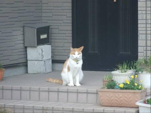 猫写真で家の廻りをパトロールし縄張りを守りに行くところの猫写真