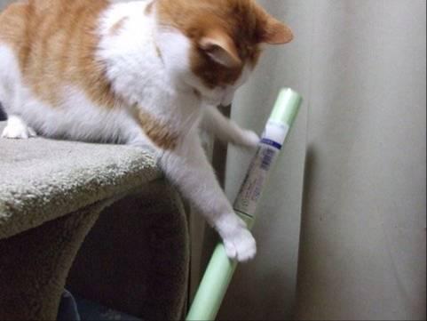 猫ペットのクリちゃんがホウキを持って掃除はじめた!おもしろしろ写真