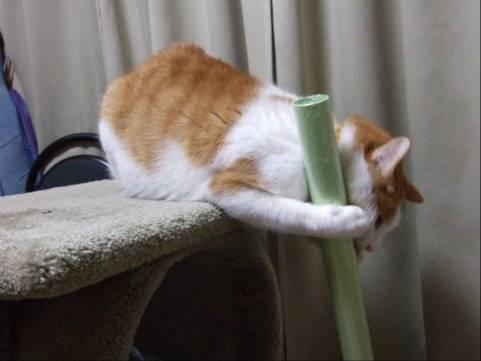 猫のクリちゃんがホウキでゴミを集め始めたのには驚きのおもしろ写真