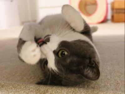 しっぽ宅の猫いちごちゃん 0