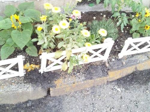 我が家の庭にも多くの黄色い花たちが咲き出した写真です