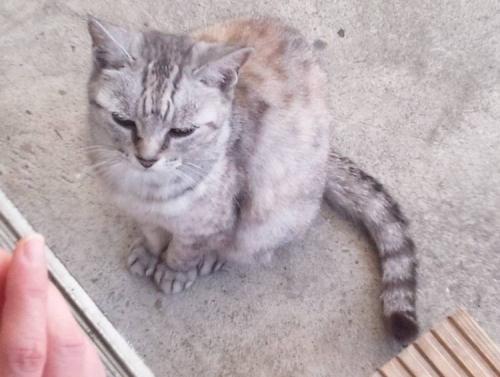 我が家に来た新たな野良猫だが老猫だと思う猫写真
