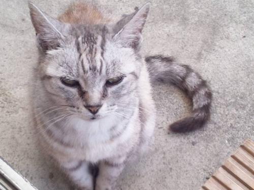 我が家に来た老猫の野良猫はエサを少ししか食べないが野良猫って健康的で強く生きてると思い撮ったデジカメ写真