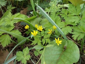 140417黄色の花