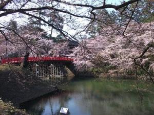 140424杉の大橋と桜