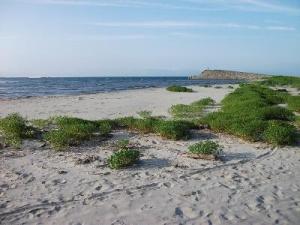 140703砂浜