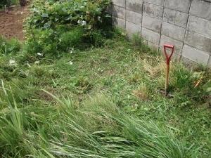 140728上草を刈る