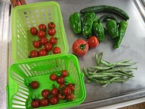 140807雨中の収穫