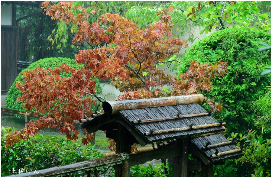 高知への帰省・竹林寺3