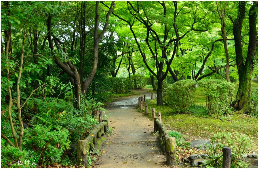 京都植物園5