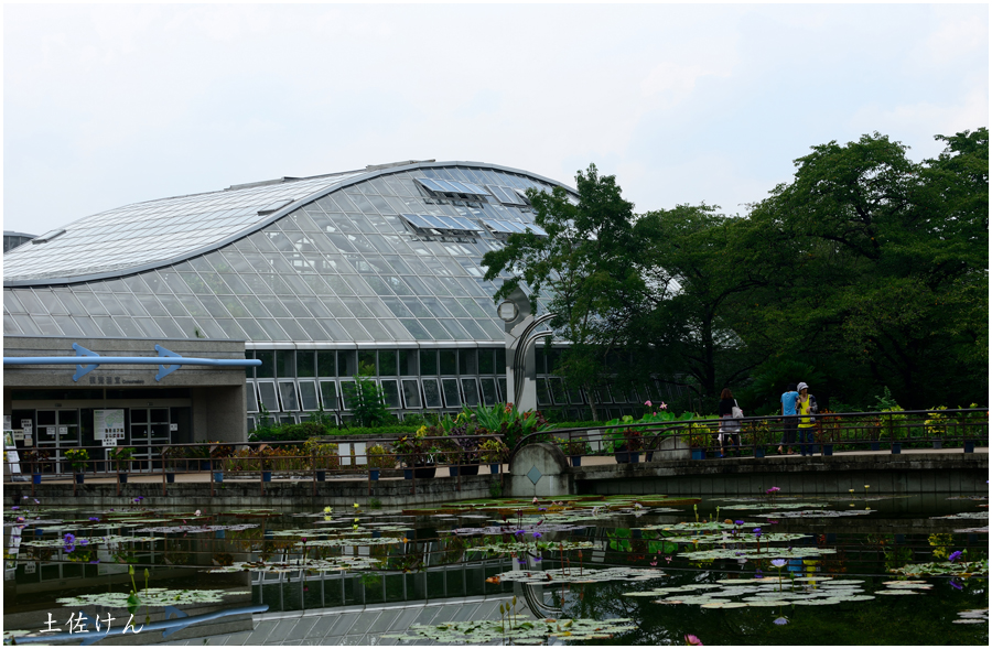 京都植物園1