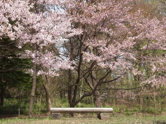 桜舞うこの約束の地で03