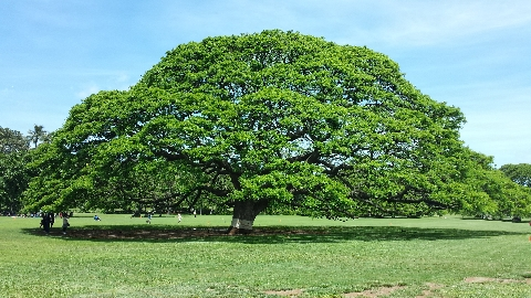 このー木なんの木、気になる木