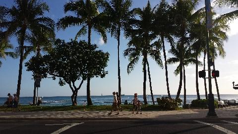 ハワイっぽいイラスト写真