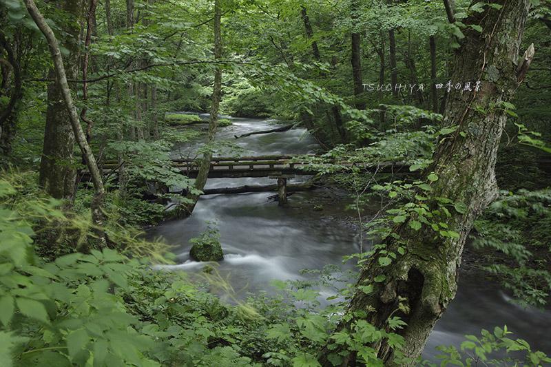 奥入瀬渓谷 2