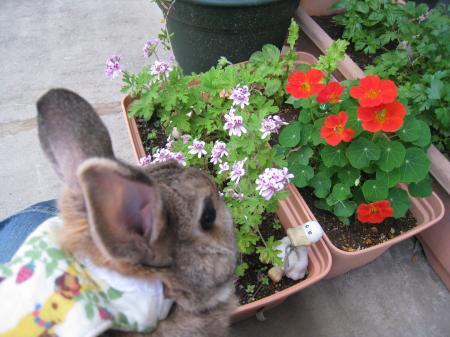 これ、香りが良いお花だね♪
