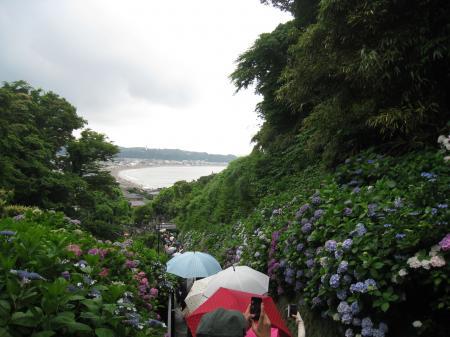 傘も紫陽花みたいだね!