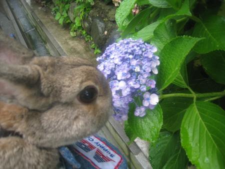 ねぇ、お花はおしっこしないの?