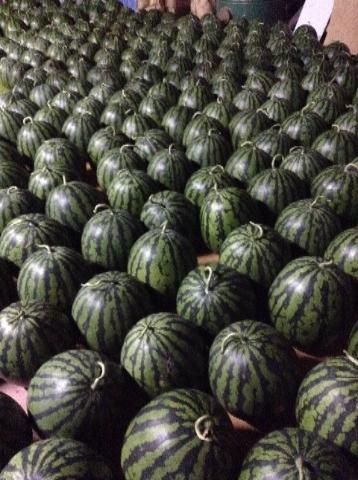 たくさんの西瓜