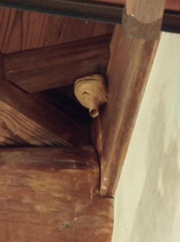 玄関の横にスズメバチの巣が