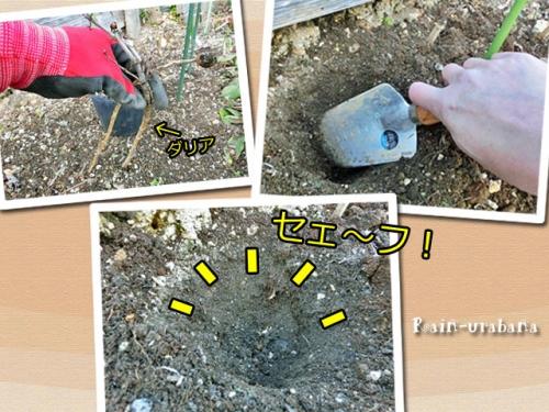 掘り起こし事故ならず (^ ^V