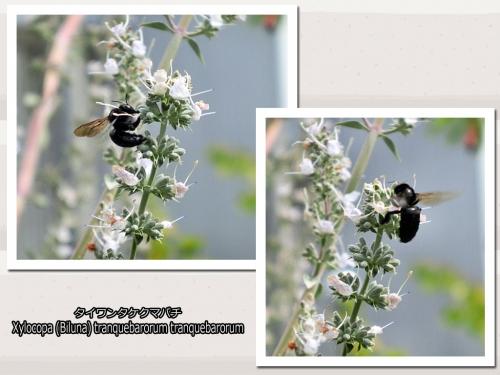 蜂がブンブンブンブン群がっちゃってますぅ (・ ・;