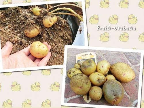 収穫 (^ ^)