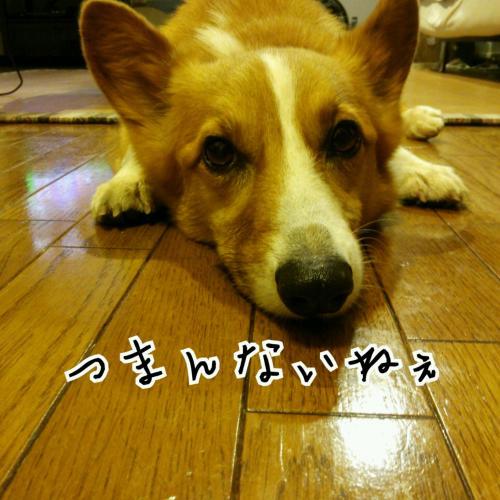 1_201406301948164d0.jpg