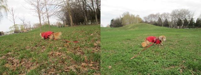 2014、5、1公園