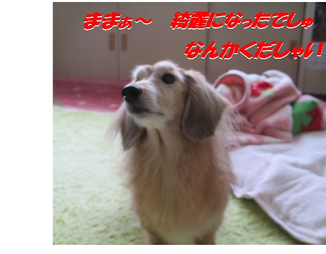 IMG_1516.jpg
