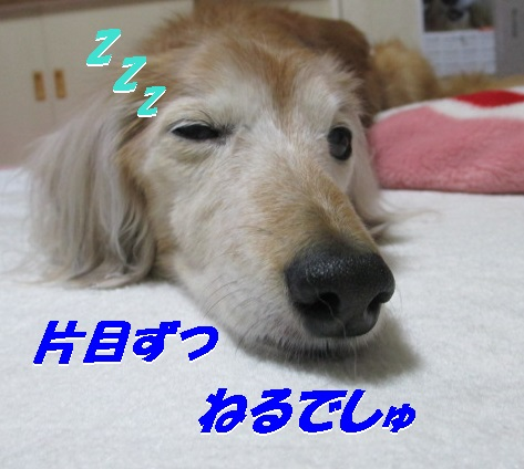 IMG_1835.jpg