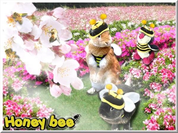 201406 HONEY BEE レイたんと♪
