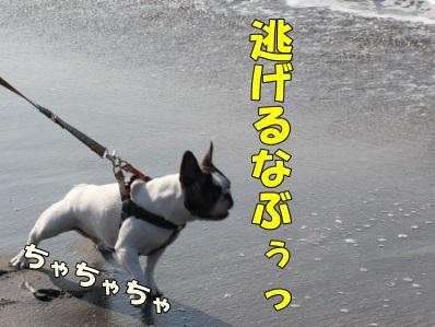 11_201404221446032c2.jpg