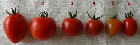 8月10日撮影 ~ 6種類のトマト