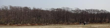 駐車場からマクンベツ湿原に向かうところです。向こうに見えるのがマクンベツ湿原です。