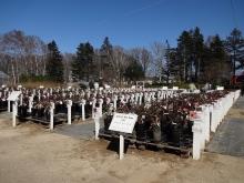 苗木売場のバラコーナー