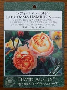 レディ・エマ・ハミルトン 表